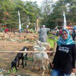 Tebar Hewan Kurban Idul Adha 1440 Hijriah di Zona Madina
