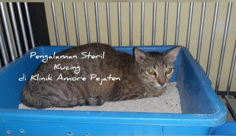 Steril kucing di Amore Pejaten